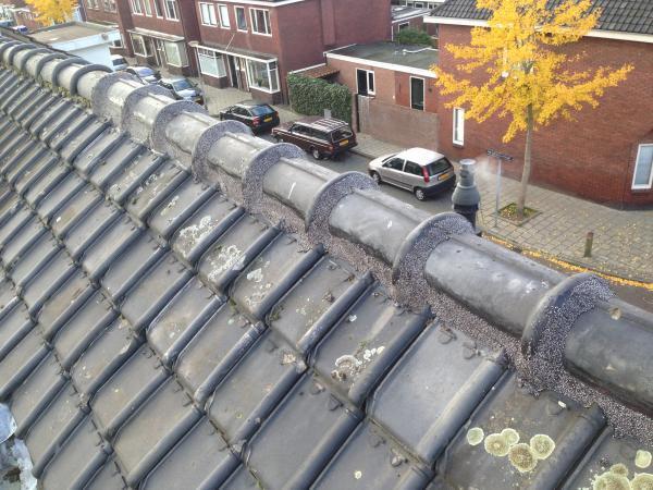 Nokvorst reparatie prijs nu 39 euro per meter, de prijs van alles boven de 8 meter is 29 euro per meter